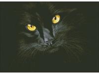 """Набор для создания алмазной мозаики ПАУТИНКА """"Черная кошка"""" М301"""